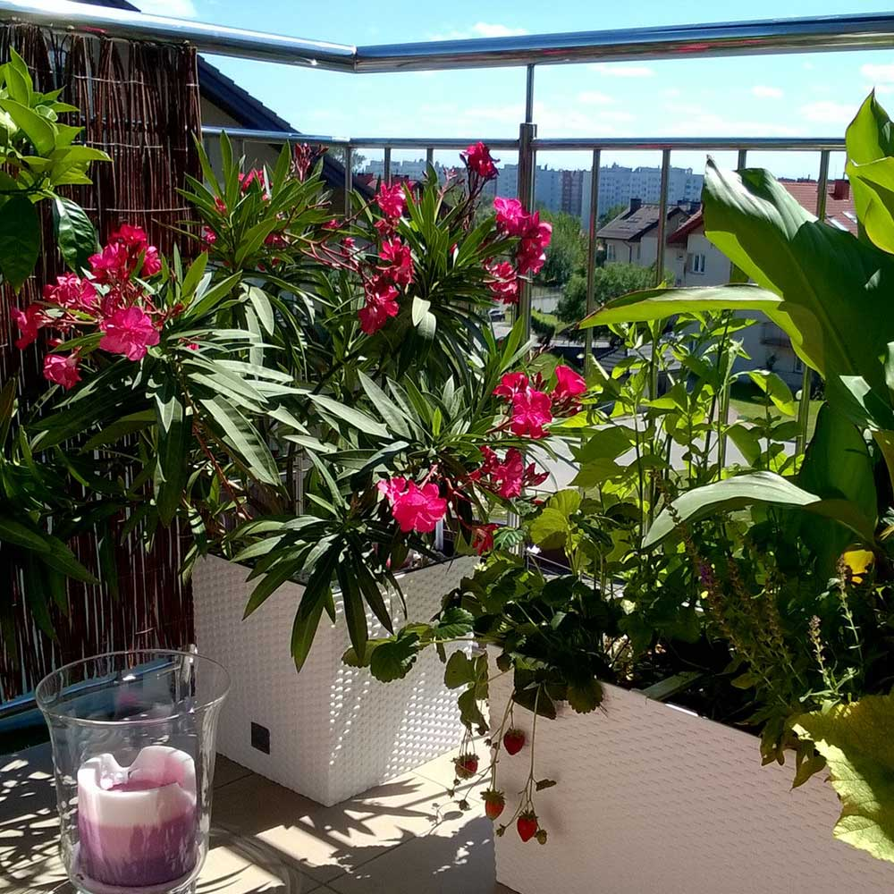 balkony-projekt-ogrody
